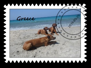 Rhodesian ridgebacks Multi CH, Grand CH Douala Ghana, Int CH, Multi CH, Grand CH Milengalenga Ghana's Heaven & Int CH, Multi CH, Grand CH Mwamba Lion Strength Shumba, Belgrade, Serbiavacation
