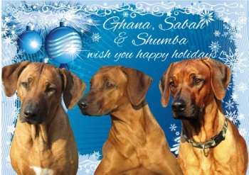 Rhodesian ridgebacks Douala Gana, Milengalenga Ghana's Heaven and Mwamba Lion Strength
